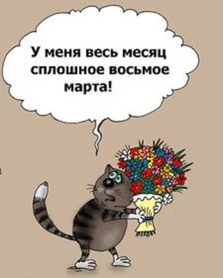 ржачный анекдот про кошек