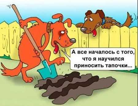 смешной анекдот про собак и хозяев