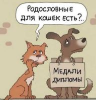 угарный анекдот про котов и собак