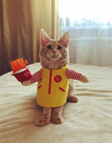 смешные картинки котов