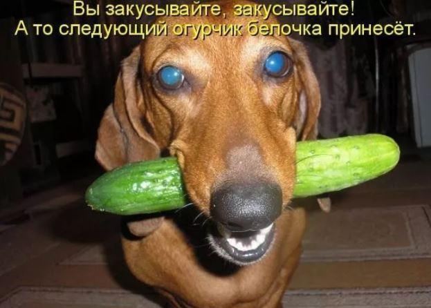 смешные фото животных (10)