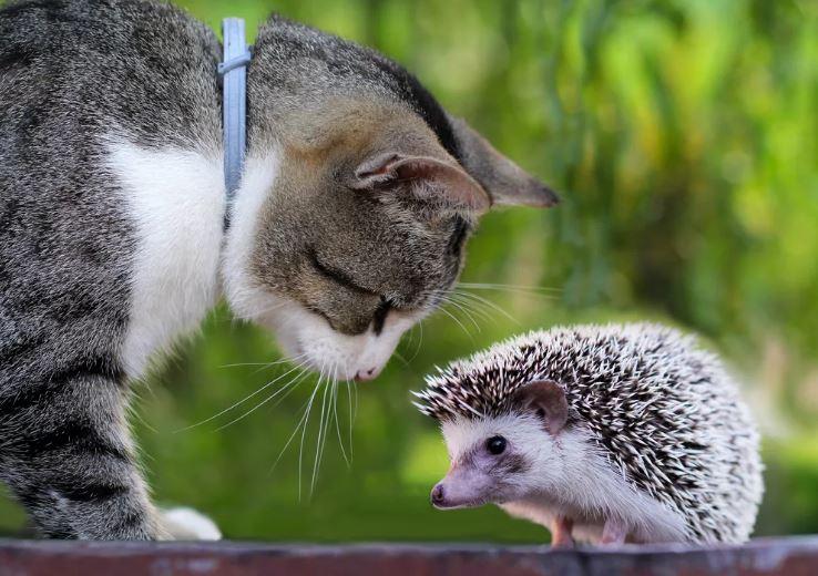 смешные фото животных (11)