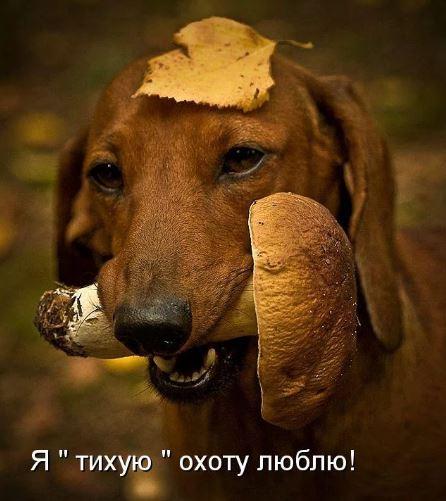 смешные фото животных (12)