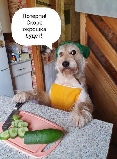 смешные фото животных (13)
