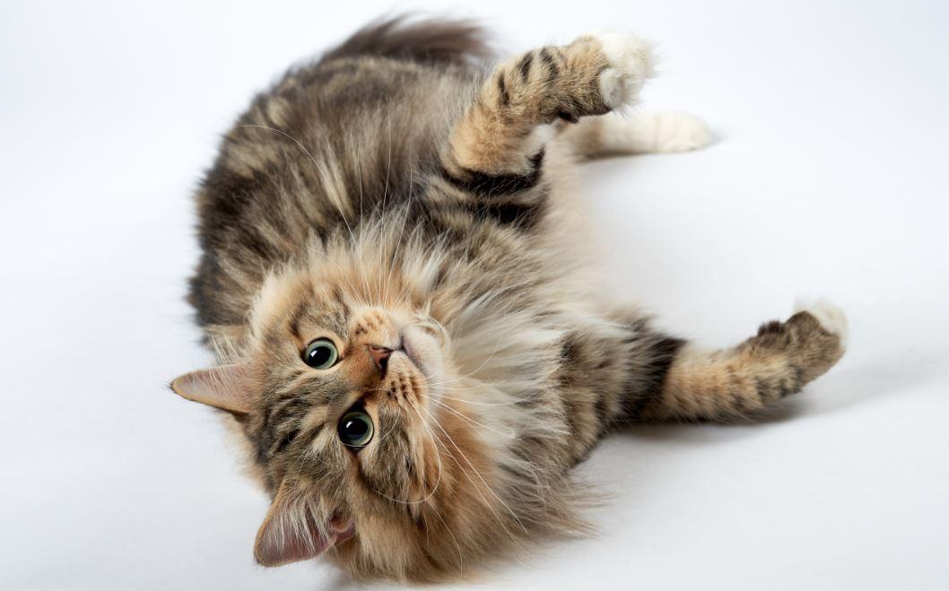 картинки котов