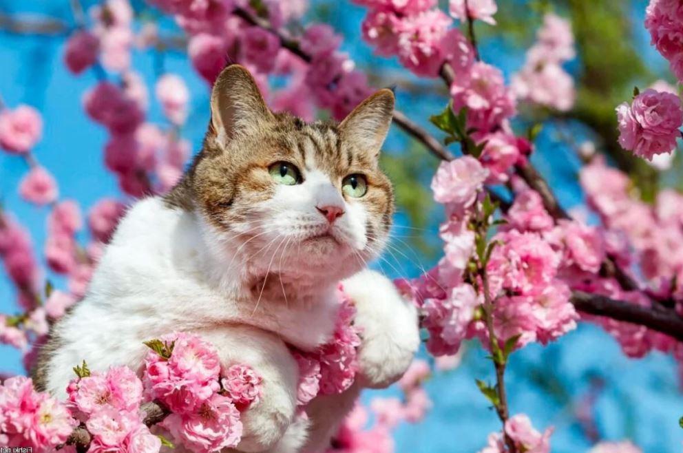 весна картинки смешные