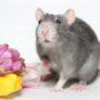 Весна природа  животные, прикольные картинки