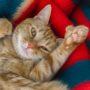 Красивые картинки про котов, кошек и котят