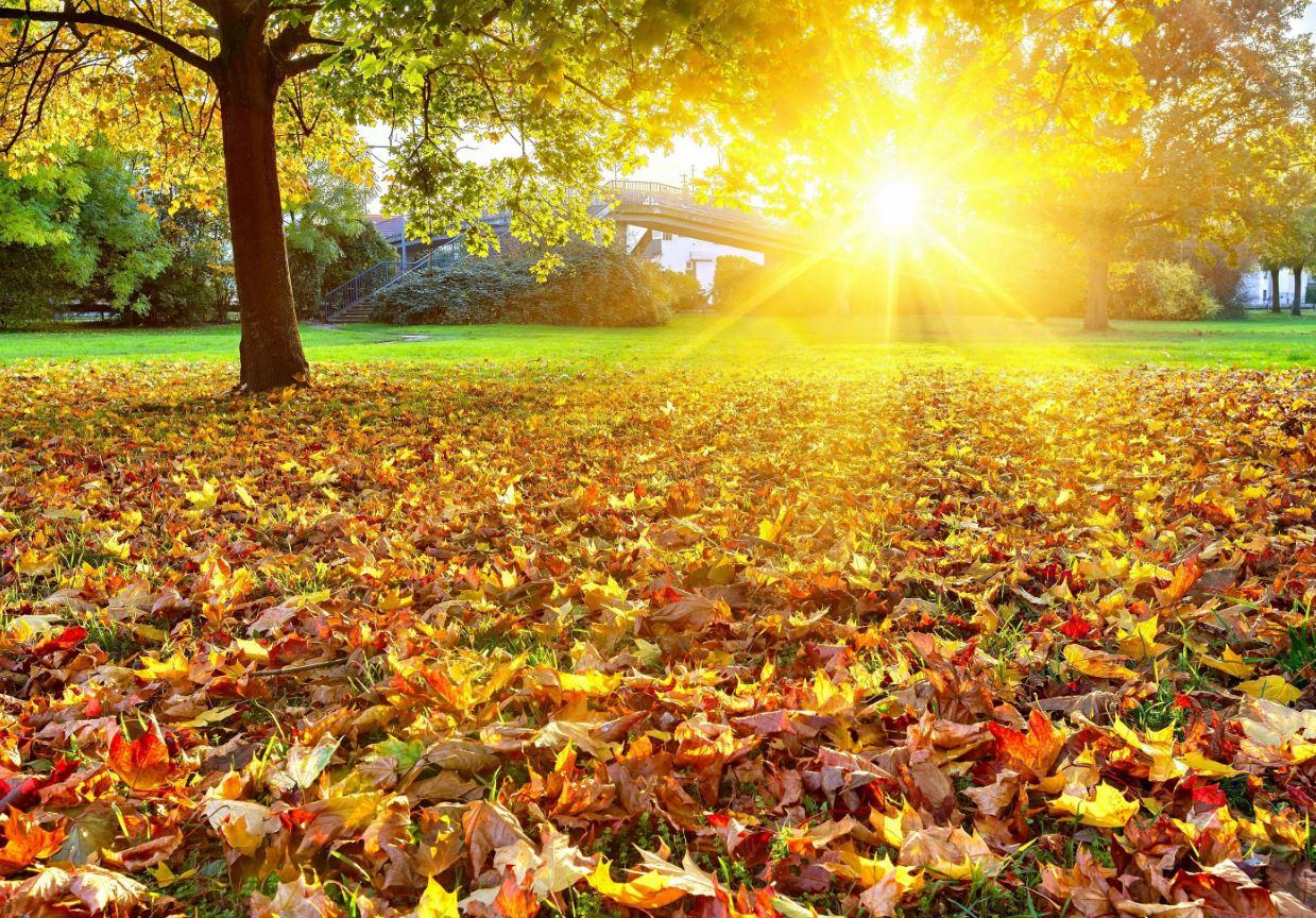 стихи про осень 7