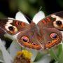 Красивые картинки и фото природы, животных